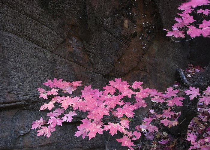 Fall Greeting Card featuring the photograph Pink Fall Colors In Sedona Arizona by Dave Dilli