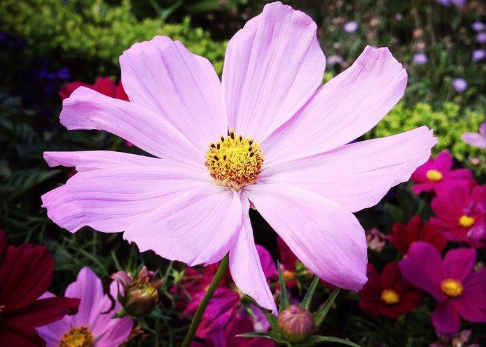 Pretty Pink Poppy Macro Greeting Cards