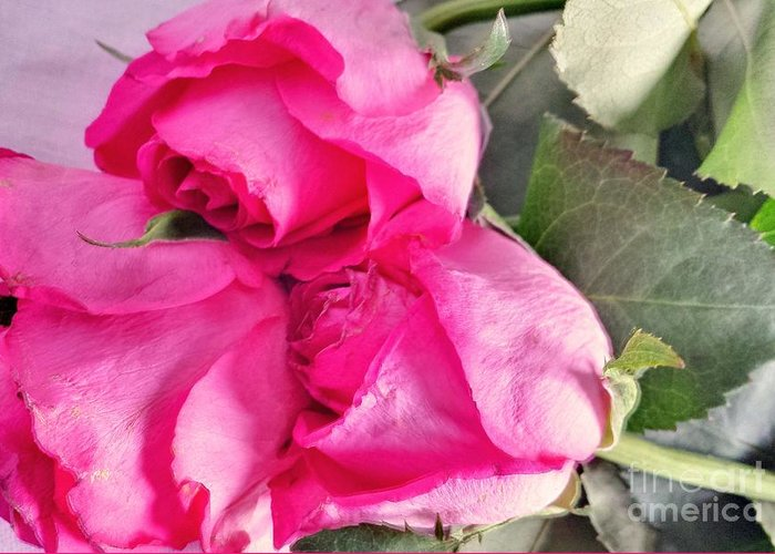 Roses Greeting Card featuring the photograph Pink Roses by Lisa Byrne