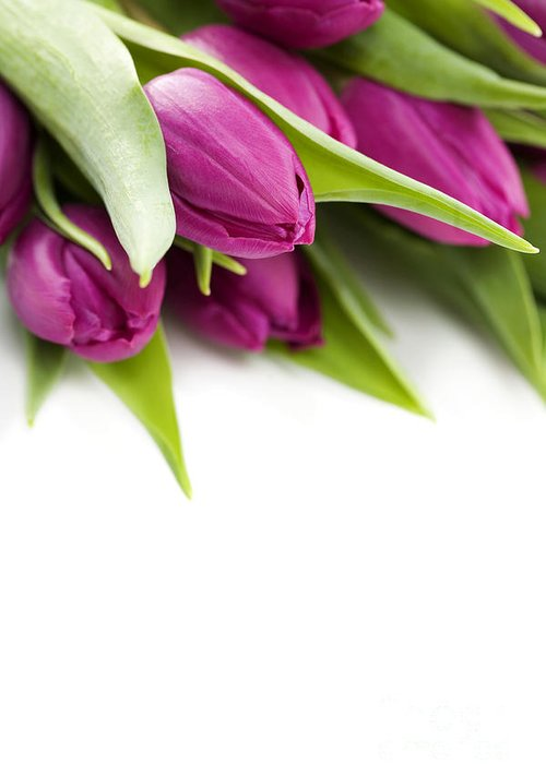 Pink Tulip Greeting Card featuring the photograph Pink Tulip by Boon Mee