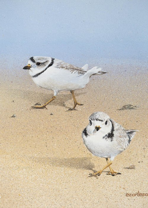 Piping Plovers Greeting Card featuring the painting Piping Plovers by Ezartesa