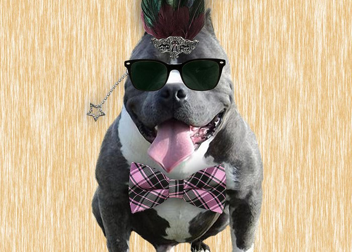 Pitbull Greeting Card featuring the mixed media Pitbull Bowtie Collection by Marvin Blaine