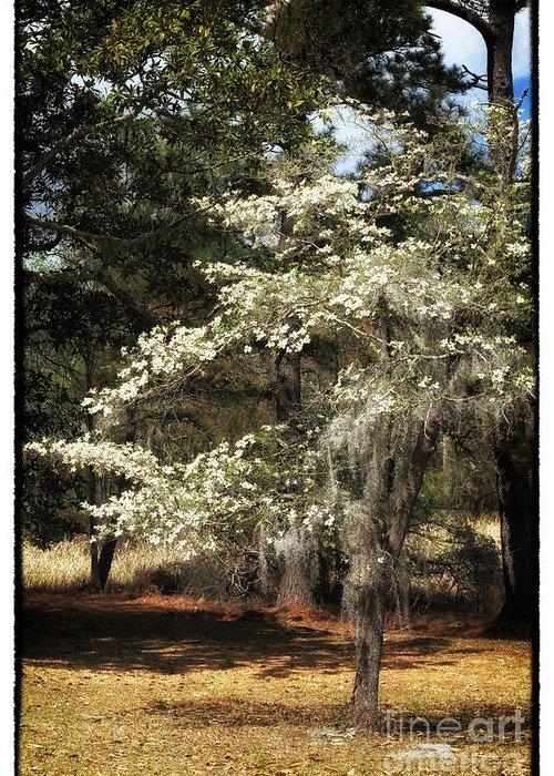 Plantation Tree Greeting Card featuring the photograph Plantation Tree by John Rizzuto