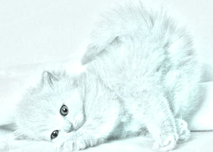 Animal Greeting Card featuring the photograph Playful Kitty by J D Owen