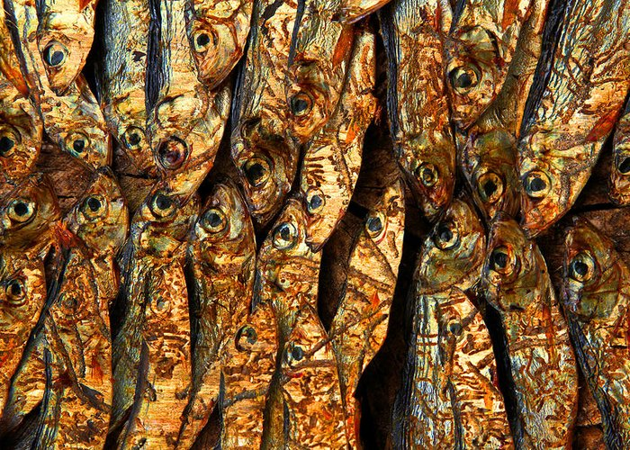 Animal Greeting Card featuring the photograph Plenty Of Small Dried Fishes On A Stack by Jean Schweitzer