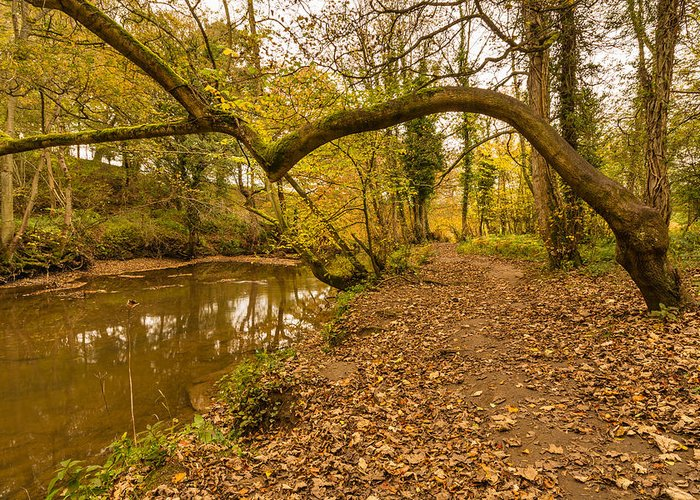 Northumberland Greeting Card featuring the photograph Plessey Woods Riverside Footpath by David Head