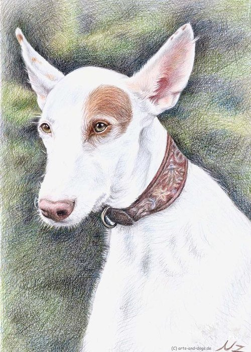 Dog Greeting Card featuring the drawing Podenco Ibicenco by Nicole Zeug