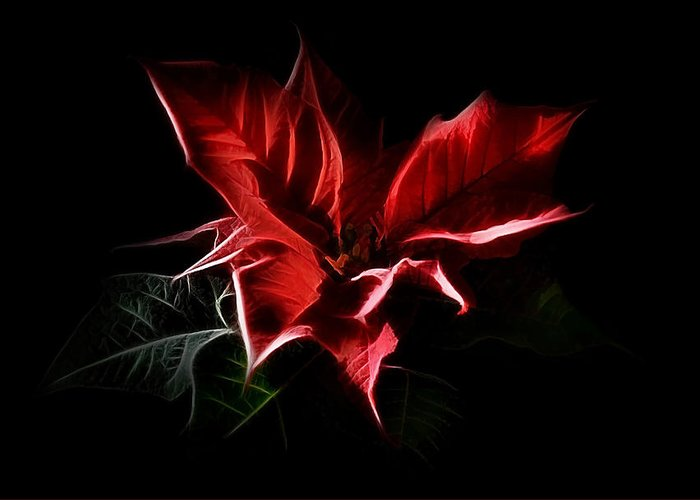 Poinsettia Greeting Card featuring the digital art Poinsettia - Christmas Flower by Gynt