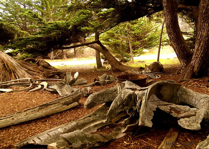 Whalers Cabin Greeting Card featuring the digital art Point Lobos Whalers Cove Whale Bones by Barbara Snyder