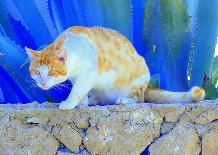 Cat Greeting Card featuring the photograph Look In The Blue For The Pointing Puma by Hilde Widerberg