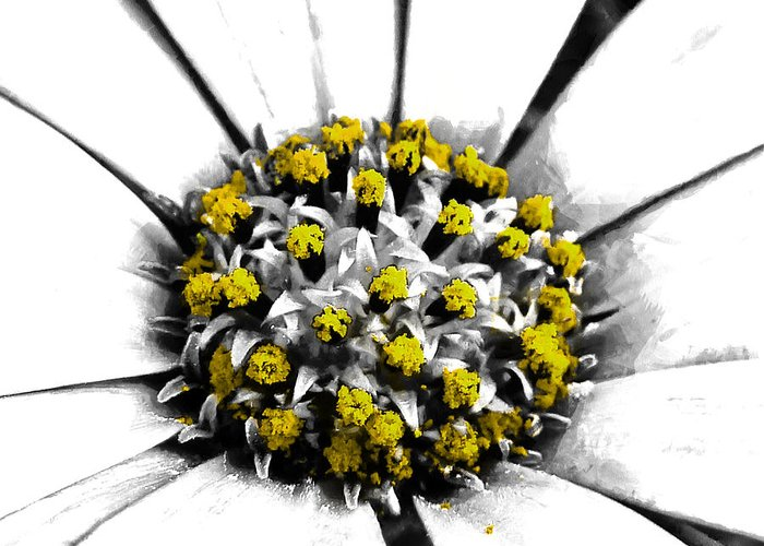 Selective Greeting Card featuring the photograph Pollen by Steve Taylor
