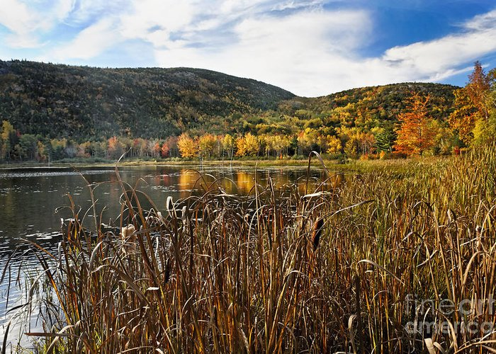 Acadia Greeting Card featuring the photograph Pond With Autumn Foliage by George Oze