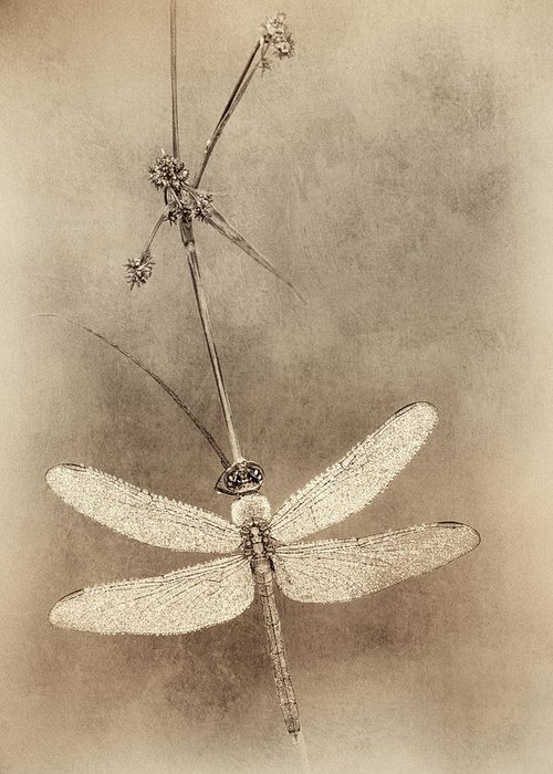 Cuyahoga Valley National Park Greeting Card featuring the photograph Pondhawk Dragonfly by Jeffrey Gibson