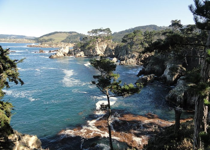 Point Lobos Greeting Card featuring the photograph Pont Lobos Cove by Shannon Grissom