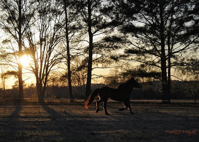 Nature Greeting Card featuring the photograph Pony's Evening Pasture Trot by Paulette B Wright