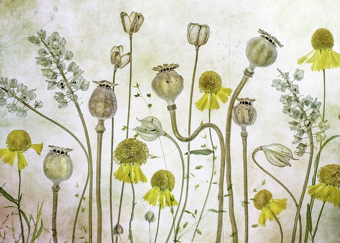 Poppy Greeting Card featuring the photograph Poppies And Helenium by Mandy Disher