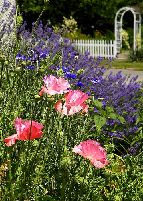Garden Greeting Card featuring the photograph Poppies And Lavender by Chris Berry