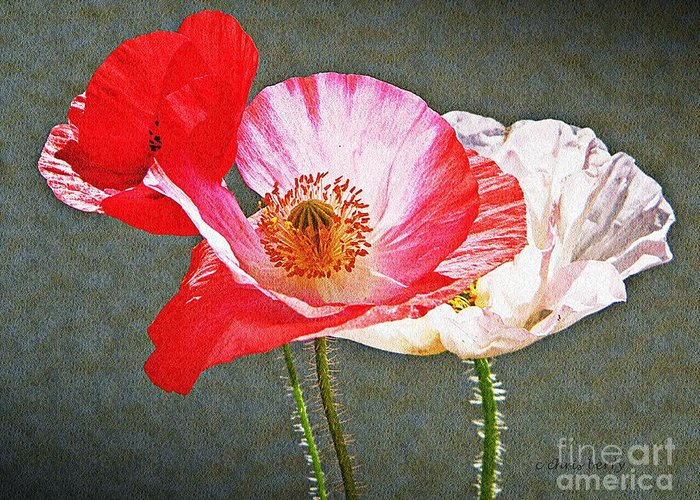 Nature Greeting Card featuring the photograph Poppies by Chris Berry