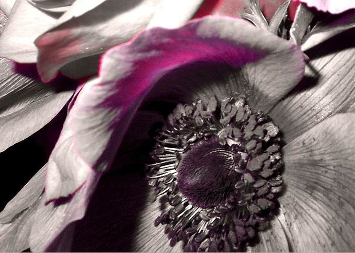 Flower Greeting Card featuring the photograph Poppy Eye by Sharon Costa