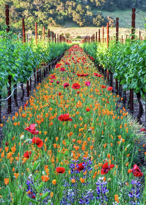 Tranquility Greeting Card featuring the photograph Poppy Lined Vineyard by Rmb Images / Photography By Robert Bowman