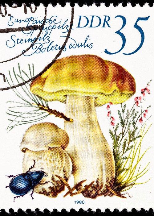 Ddr Greeting Card featuring the photograph Porcini Mushroom Boletus Edulis by Jim Pruitt