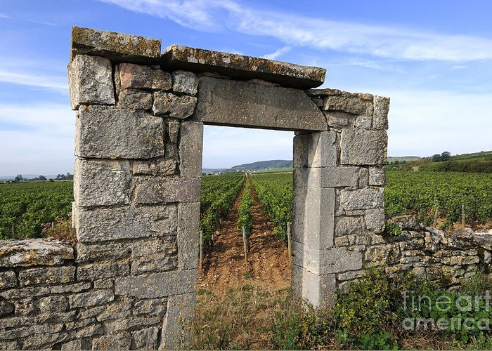 Agricultural  Greeting Card featuring the photograph Portal Of Vineyard In Burgundy Near Beaune. Cote D'or. France. Europe by Bernard Jaubert