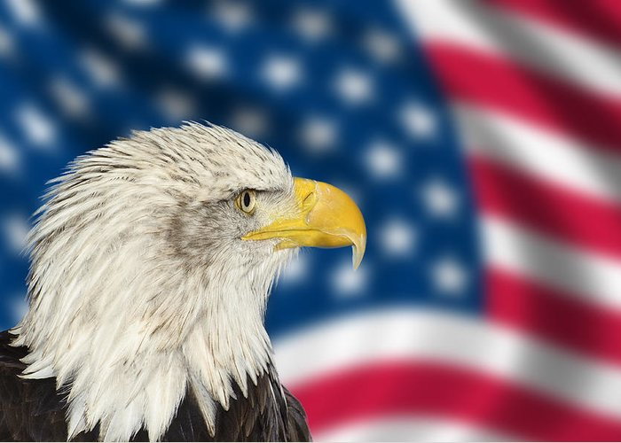Bald Eagle Greeting Card featuring the photograph Portrait Of American Bald Eagle Against Usa Flag Stars And Strip by Matthew Gibson