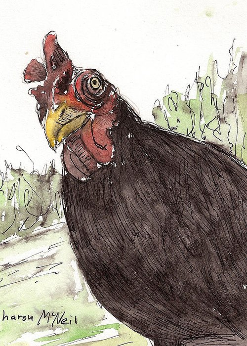 Chicken Greeting Card featuring the drawing Portrait Of Drumstick by Sharon McNeil