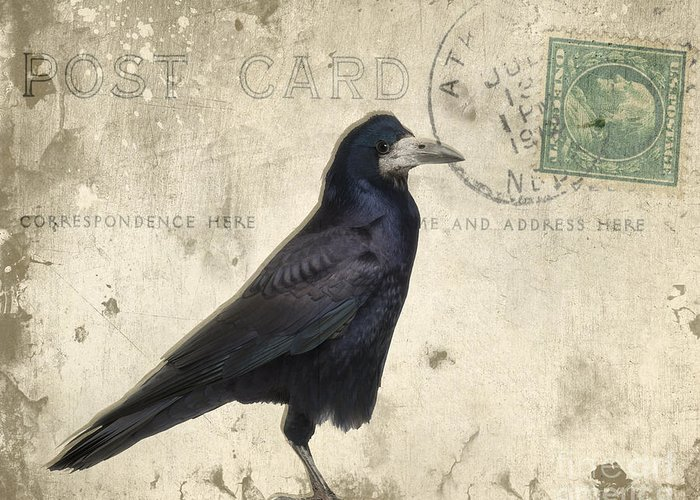Raven Greeting Card featuring the photograph Post Card Nevermore by Edward Fielding