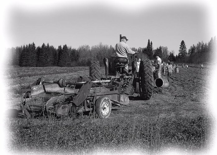 Potato Harvest Greeting Card featuring the photograph Potato Harvest 16 by Gene Cyr