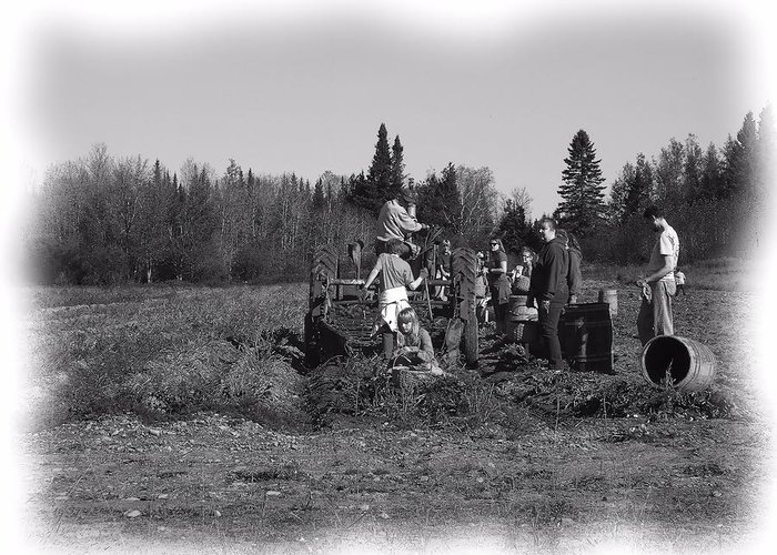Potato Harvest Greeting Card featuring the photograph Potato Harvest 18 by Gene Cyr