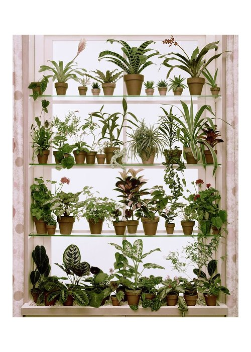 Plants Greeting Card featuring the photograph Potted Plants On Shelves by Wiliam Grigsby