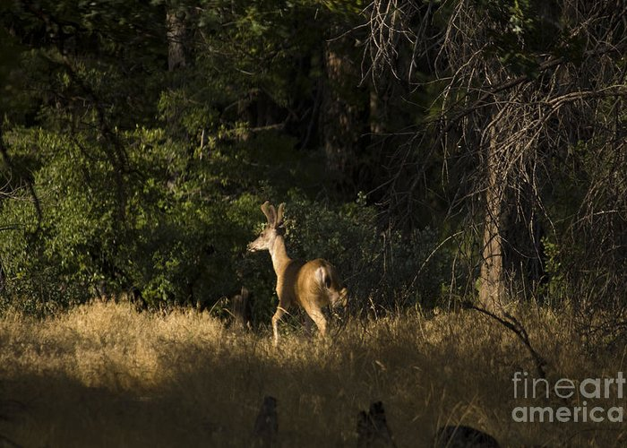 Landscape Greeting Card featuring the photograph pr 140 -Deer in the Grass by Chris Berry