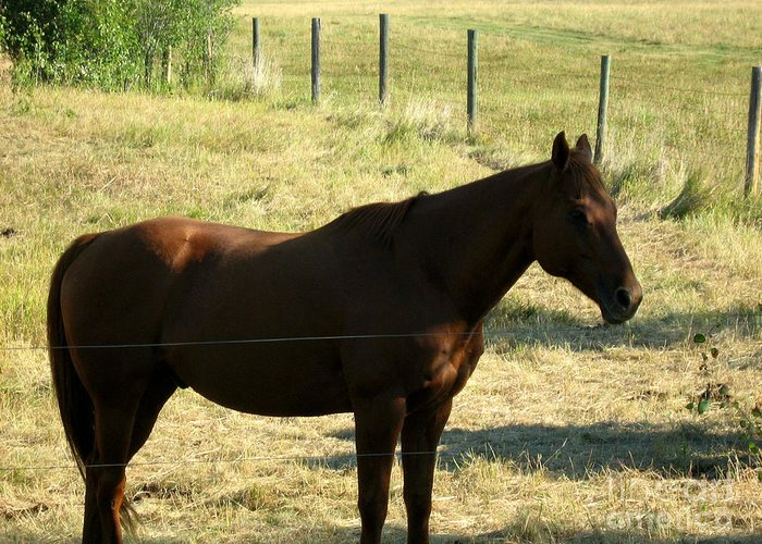 Prairie Horse Greeting Card featuring the photograph Prarie Stallion In The Shade by Barbara Griffin