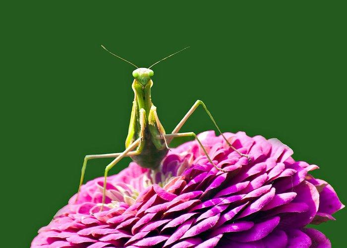 Praying Mantis Photograph By David Simons