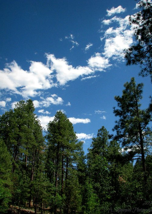 Goldwater Lake Greeting Card featuring the photograph Prescott National Forest Spring Skies by Aaron Burrows