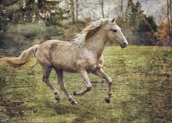 Rocky Mountain Horse Greeting Card featuring the photograph Pretty Boy by Peter Lindsay