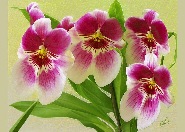 Exotic Flower Greeting Card featuring the photograph Pretty Faces - Orchid by Ben and Raisa Gertsberg