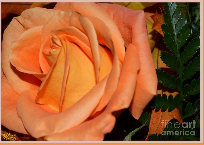 Single Flower Greeting Card featuring the photograph Pretty In Peach by Rennae Christman