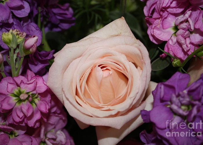 Pink Rose Greeting Card featuring the photograph Pretty Pastel Flowers by Danielle Groenen