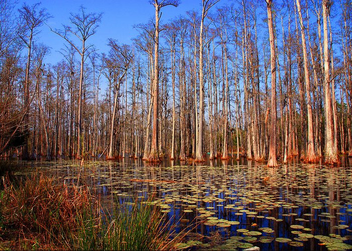 Swamp Greeting Card featuring the photograph Pretty Swamp Scene by Susanne Van Hulst