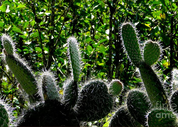 Cactus Greeting Card featuring the photograph Prickly Juans by Al Bourassa