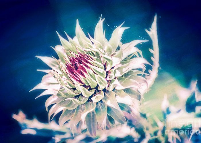 Wildflower Macro Greeting Card featuring the photograph Prickly Thistle Bloom by Peggy Franz
