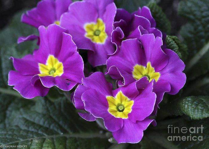 Flowers Greeting Card featuring the photograph Primrose Purple by Deborah Benoit