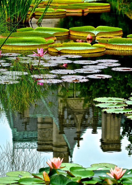 Lily Greeting Card featuring the photograph Prince Charmings Lily Pond by Frozen in Time Fine Art Photography