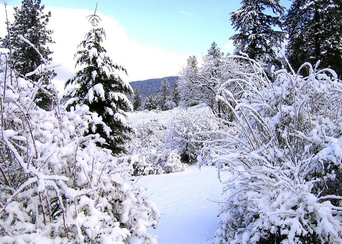 Pristine Winter Trail Greeting Card featuring the photograph Pristine Winter Trail by Will Borden