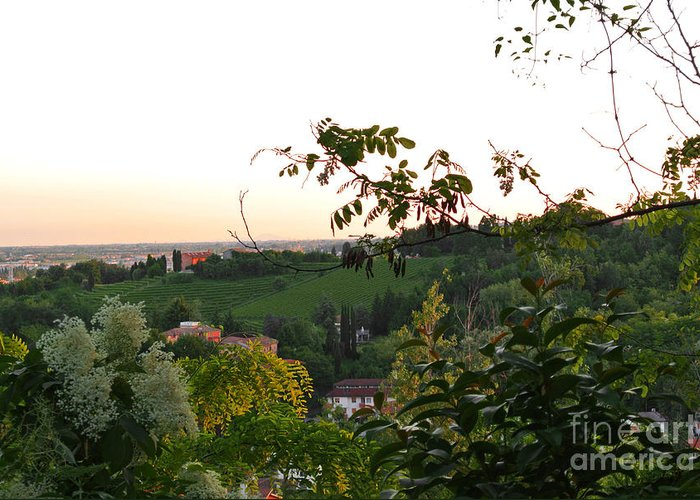Vineyard Greeting Card featuring the photograph Prosecco Vineyards by Sarah Christian
