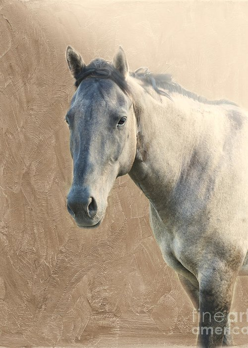 Horse Greeting Card featuring the photograph Proud by Betty LaRue
