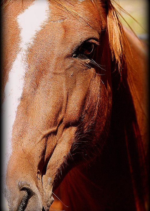 Horse Greeting Card featuring the photograph Proud by Kerri Huven