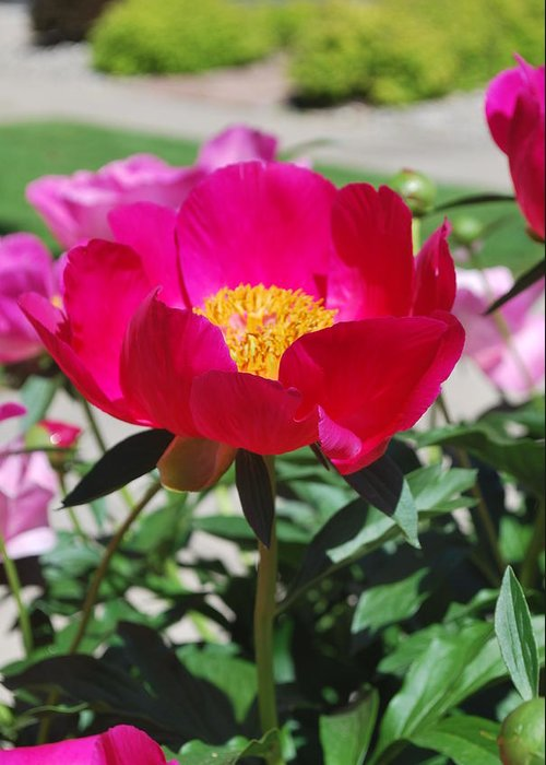 Spring Flowers Greeting Card featuring the photograph Proud To Be Pink by Billie Colson